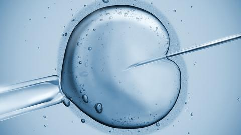 Interesting facts to know about Sweden's human embryo editing study